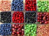 LotsOfBerries