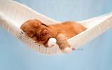 Puppies-84