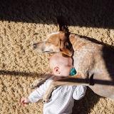 Maddie The Coonhound-Baby Naps