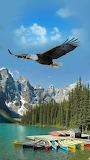 Eagle in flight great