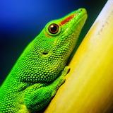 *☺ Green Lizard...
