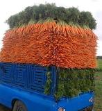OCD load of carrots