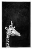 "Animals art lustik Giraffe ""Dominique Schoenig"""