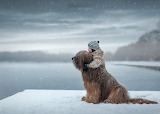 Dog watching snow with boy