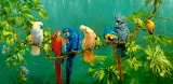 Parrots in Jungle