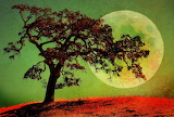 Planets Trees Nature471887