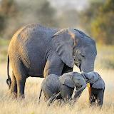 Animali da proteggere-Elefanti