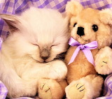 #Kitty and Teddy