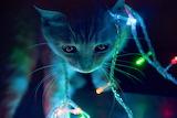 Lights-kittens
