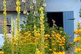Farm House Flowers