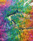 Rainbow Forrest