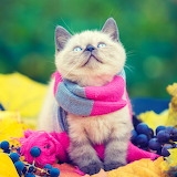 😻Ready for Fall...