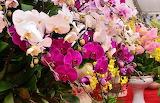 Exposicion-de-orquideas-llenara-de-color-el-jardin-botanico-7676