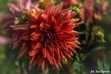 Kwiaty-foto-Ewa Gajewska