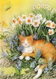 Sonnellino tra i fiori
