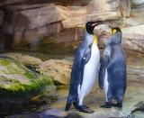 Berlin nature germany de deutschland zoo aquarium penguins-41925