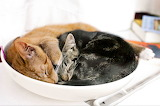 Bowl Of Cats