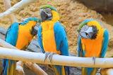 Parrots, birds, animals, nature