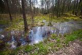 Pântanos mágicos da Letônia