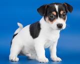 ☺ Puppy...