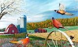Pheasant Country~ LRadcliff
