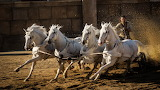 racing horses, Ben-Hur