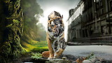 Awesome-Tiger-Hd-Wallpaper-Graphic-For-Share-On-Facebook