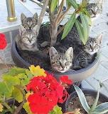 Pot full of kittens