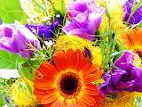 #Bright Florals