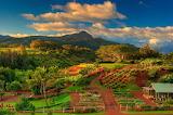 Kukuilia-farm0and-garden-in-kauai-hawaii