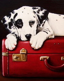 Dalmation pup on red suitcase
