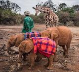 Orphans ~ Nairobi