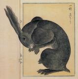 """Madamma tumblr dogstardreaming Rabbit """"本草図説「アナウサギ」 高木春山"""""""