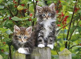 Kitties on the Fence...