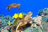 sea turtles and fish