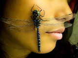dragonfly natgeo