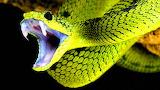 snake on a tree branch photo