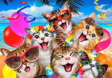 Summertime kitties