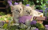 Cute Animal wallpaper 2012 06