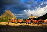 Jason Savage Photography Beautiful Horses