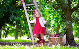 Girl, child, cherry trees, ladder, basket