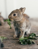 "Madamma tumblr tangledwing bunny ""Melanie DeFazio Photography"""