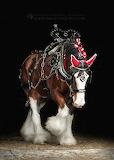 Horses - The nobel Clydesdale