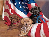 Puppies USA