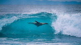 Surfing Sealion