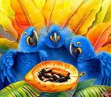 Hyacinth Macaws having breakfast - José Moreno Aparicio