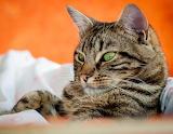 Green-eyed kitty