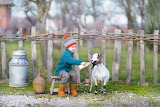 Boy feeding goat