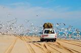 Travel-land cruiser-car-luggage-beach-sea-birds