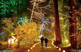 A walk in the Lights
